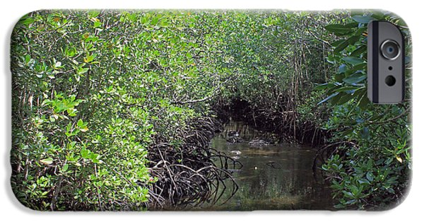 Mangrove Forest iPhone Cases - Mangrove Forest iPhone Case by Tony Murtagh
