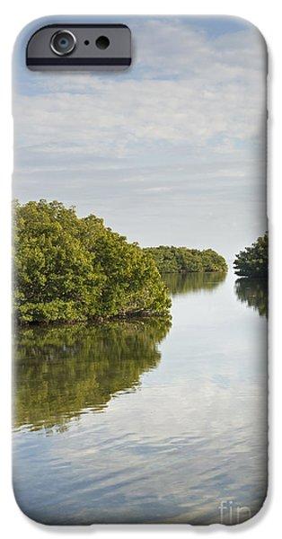 Rhizophora Mangle iPhone Cases - Mangrove Islands iPhone Case by John Arnaldi