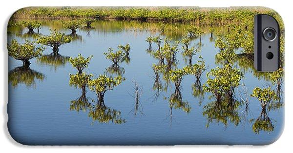 Rhizophora Mangle iPhone Cases - Mangrove Nursery iPhone Case by Paul Rebmann