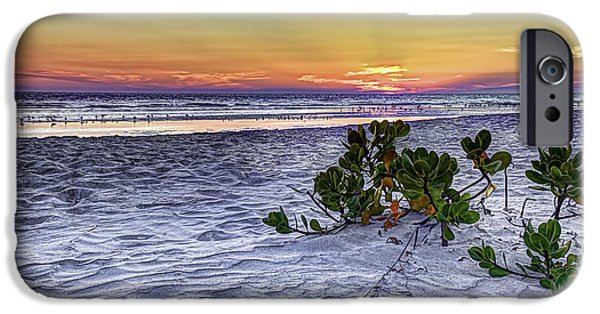 Gulf Of Mexico iPhone Cases - Mangrove On The Beach iPhone Case by Marvin Spates
