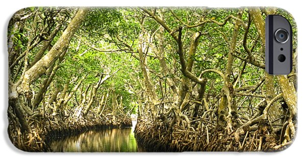 Mangrove Forest iPhone Cases - Mangrove Passage iPhone Case by Paula Joy Welter