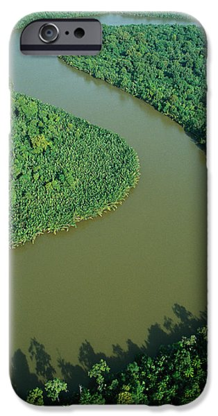 Mangrove Rhizophora Sp In Mahakam Delta iPhone Case by Cyril Ruoso