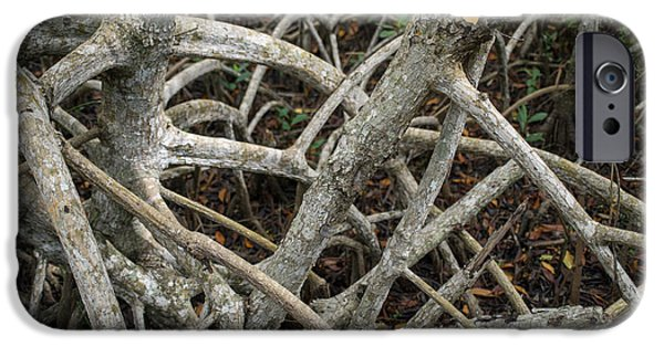 Mangrove Forest iPhone Cases - Mangrove Roots 1 iPhone Case by Tracy Knauer