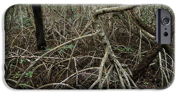 Mangrove Forest iPhone Cases - Mangrove Roots 2 iPhone Case by Tracy Knauer