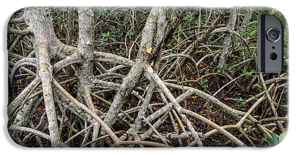 Mangrove Forest iPhone Cases - Mangrove Roots 3 iPhone Case by Tracy Knauer
