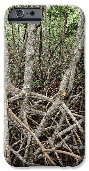 Mangrove Forest iPhone Cases - Mangrove Roots 4 iPhone Case by Tracy Knauer