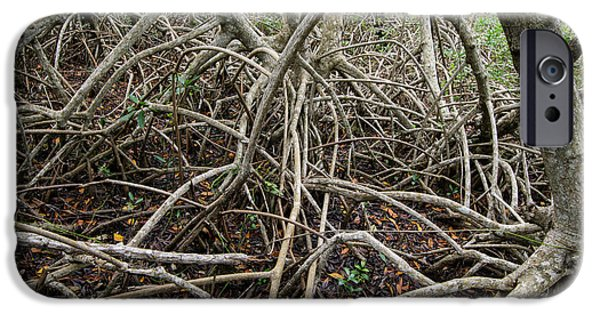 Mangrove Forest iPhone Cases - Mangrove Roots 6 iPhone Case by Tracy Knauer