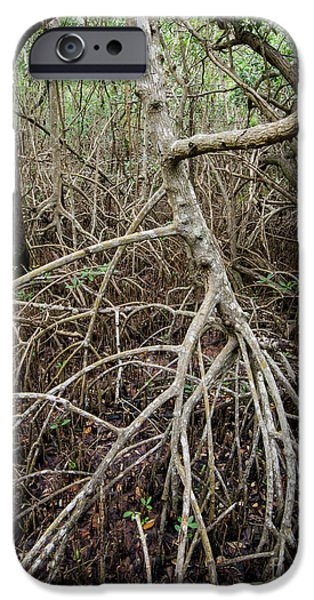 Mangrove Forest iPhone Cases - Mangrove Roots 7 iPhone Case by Tracy Knauer