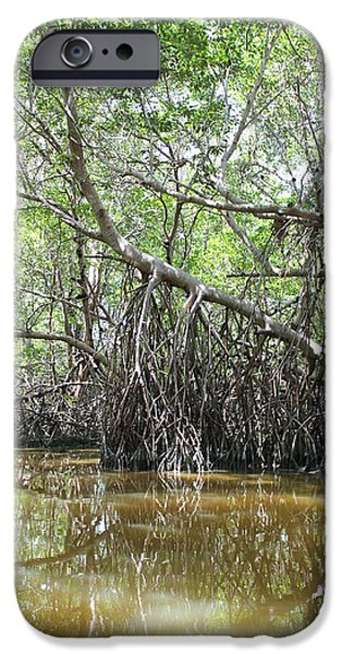 Mangrove Forest iPhone Cases - Mangrove swamp iPhone Case by Raul Ortiz-Pulido
