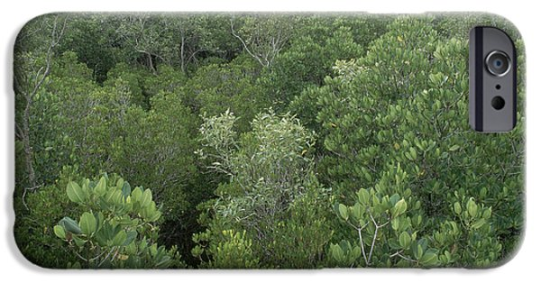 Mangrove Forest iPhone Cases - Mangrove Trees iPhone Case by Gregory G. Dimijian, M.D.