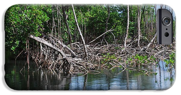 Mangrove Forest iPhone Cases - Mangroves iPhone Case by Karin Stein