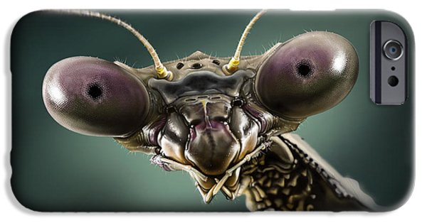 Mantises iPhone Cases - Mantis 2 iPhone Case by Andre Koekemoer