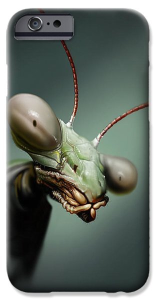 Mantises iPhone Cases - Mantis  iPhone Case by Andre Koekemoer