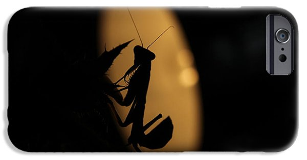 Bugs Pyrography iPhone Cases - Mantis in Moonlight iPhone Case by Frank Fodor