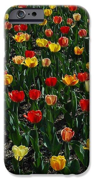 Many Tulips iPhone Case by Raymond Salani III