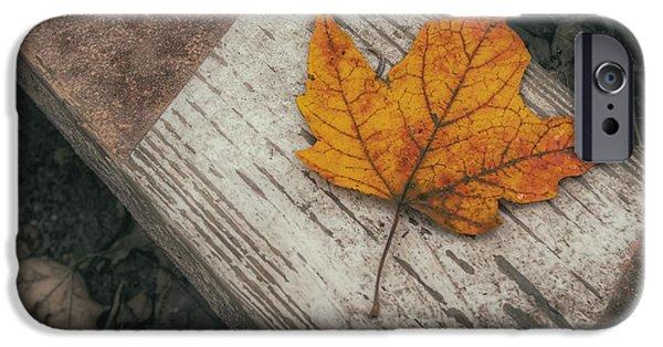 Maple Season iPhone Cases - Maple Leaf 2 iPhone Case by Scott Norris