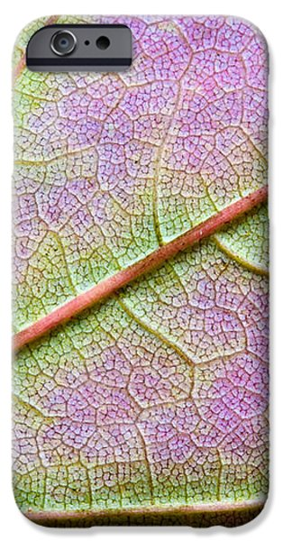 Maple Leaf Macro iPhone Case by Adam Romanowicz