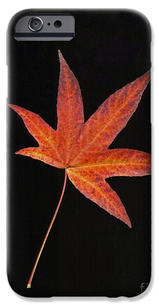 Scanography iPhone Cases - Maple Leaf on Black 2 iPhone Case by Sharon  Talson