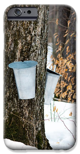 Sugaring Season iPhone Cases - Maple Sap Collection iPhone Case by Cheryl Baxter