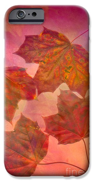 Scanography iPhone Cases - Maple Syrup iPhone Case by Jan Bickerton
