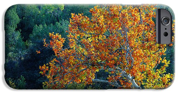 Sedona iPhone Cases - Maple Tree In Autumn iPhone Case by Richard and Ellen Thane