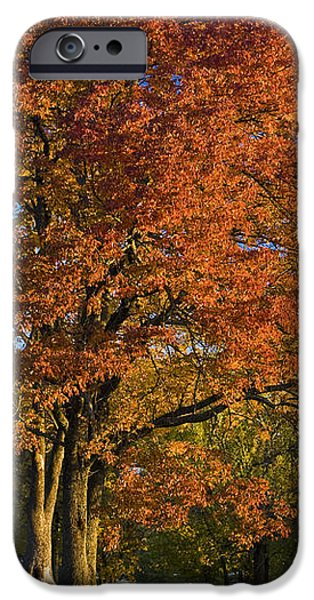 Maple Trees iPhone Case by Brian Jannsen