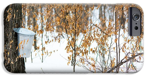 Sugaring Season iPhone Cases - Maple Woods iPhone Case by Cheryl Baxter