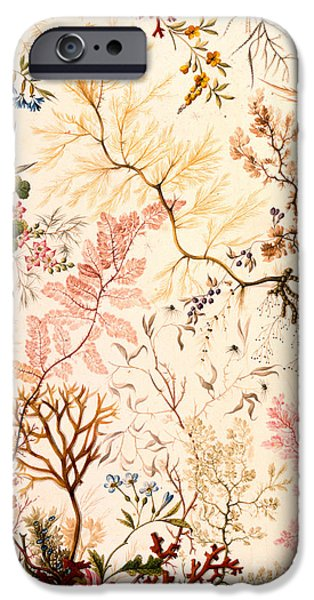 Stems Drawings iPhone Cases - Marble end paper  iPhone Case by William Kilburn