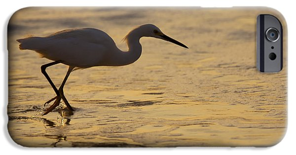 Snowy iPhone Cases - March of the Egret iPhone Case by Mike  Dawson