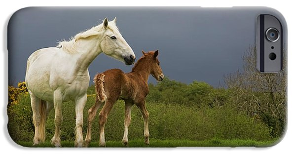 Bonding iPhone Cases - Mare And Foal, Co Derry, Ireland iPhone Case by Panoramic Images