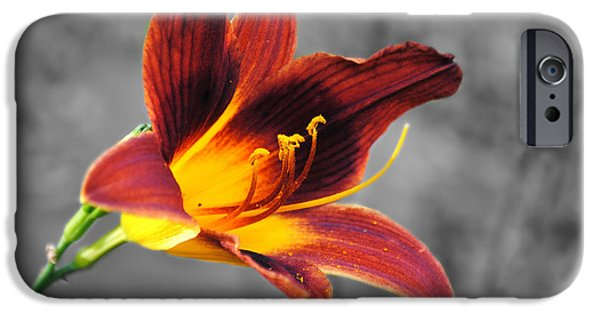 Day Lilies iPhone Cases - Margos Lily iPhone Case by Jai Johnson