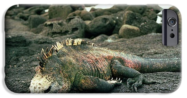 Iguana iPhone Cases - Marine Iguana Galapagos Islands iPhone Case by Panoramic Images