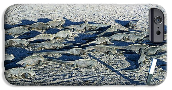 Iguana iPhone Cases - Marine Iguanas On The Beach, Galapagos iPhone Case by Panoramic Images