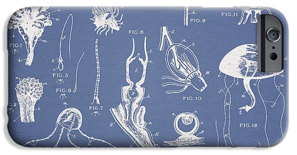 Invertebrates iPhone Cases - Marine Organisms Hydromedusae iPhone Case by Aged Pixel