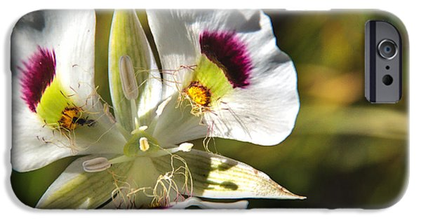 Haybale iPhone Cases - Mariposa Lily iPhone Case by Robert Bales