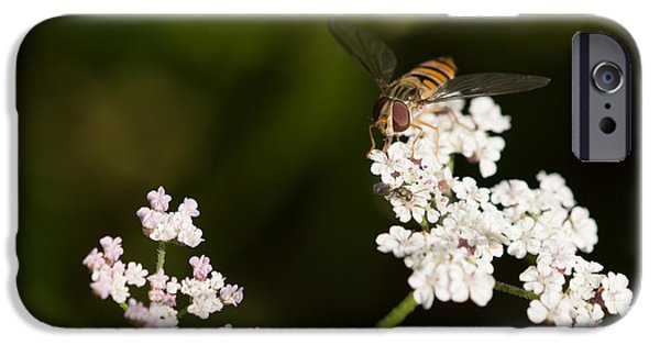 Fauna iPhone Cases - Marmalade Fly iPhone Case by Robert Carr