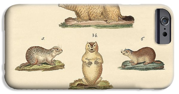 Groundhog iPhone Cases - Marmots and moles iPhone Case by Splendid Art Prints