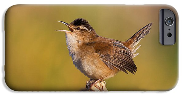 Wren iPhone Cases - Marsh Wren iPhone Case by Jim Zipp