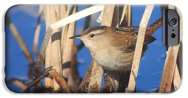 Concord iPhone Cases - Marsh Wren iPhone Case by John Burk