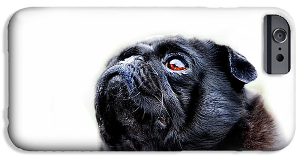 Small Dogs iPhone Cases - Martha iPhone Case by Mark Rogan