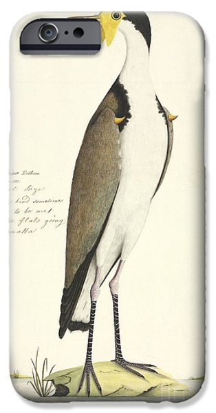 Lapwing iPhone Cases - Masked Lapwing, 18th Century iPhone Case by Natural History Museum, London