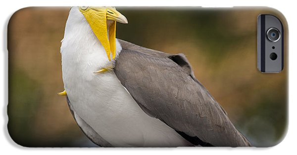 Lapwing iPhone Cases - Masked Lapwing iPhone Case by Carolyn Marshall