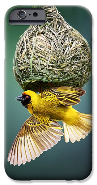 Nest iPhone Cases - Masked weaver at nest iPhone Case by Johan Swanepoel