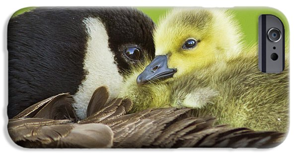 Baby Bird iPhone Cases - Maternal Love iPhone Case by Mircea Costina Photography