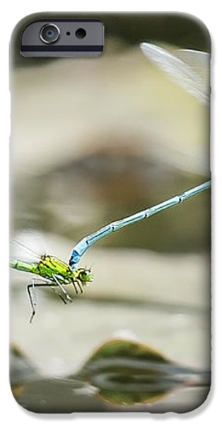 Mating Damselflies On The Wing iPhone Case by Steven Poulton