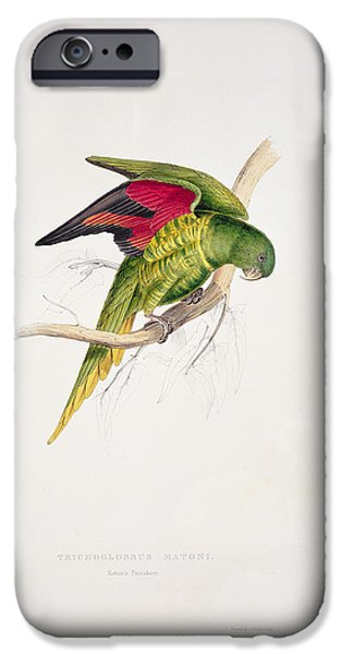 Ornithology iPhone Cases - Matons Parakeet iPhone Case by Edward Lear