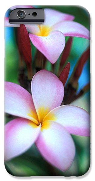 Maui Plumeria iPhone Case by Kathy Yates