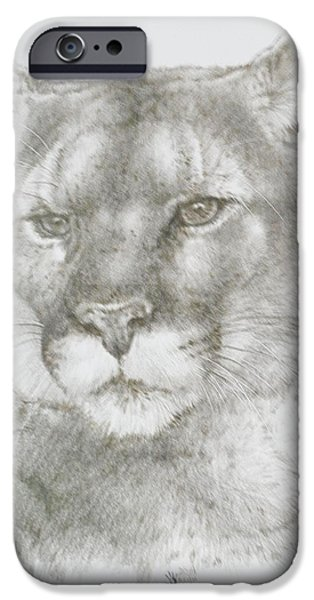Animal Drawings iPhone Cases - Maverick iPhone Case by Barbara Keith