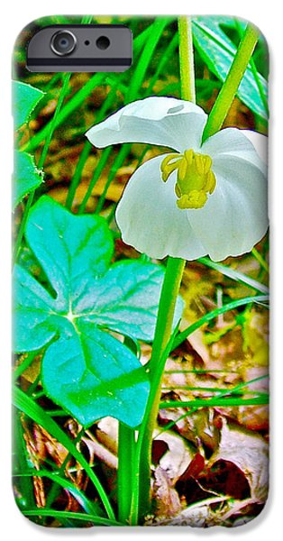 Natchez Trace Parkway iPhone Cases - Mayapple in Donivan Slough at Mile 283 of Natchez Trace Parkway-Mississippi  iPhone Case by Ruth Hager