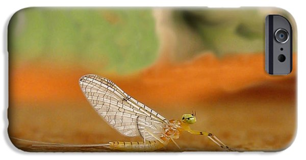 Artistic Photography iPhone Cases - Mayfly Art iPhone Case by Thomas Young